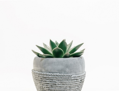 Upcycling with Succulents